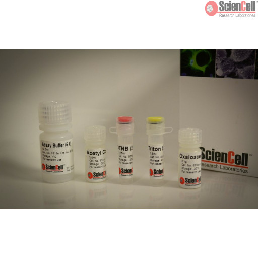 Citrate Synthase Assay