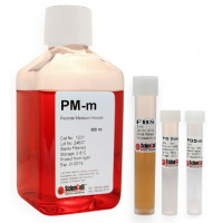 Pericyte Medium-mouse