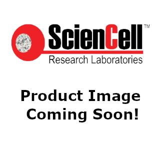 Rat Splenocytes (RS) – Relief contrast, 400x