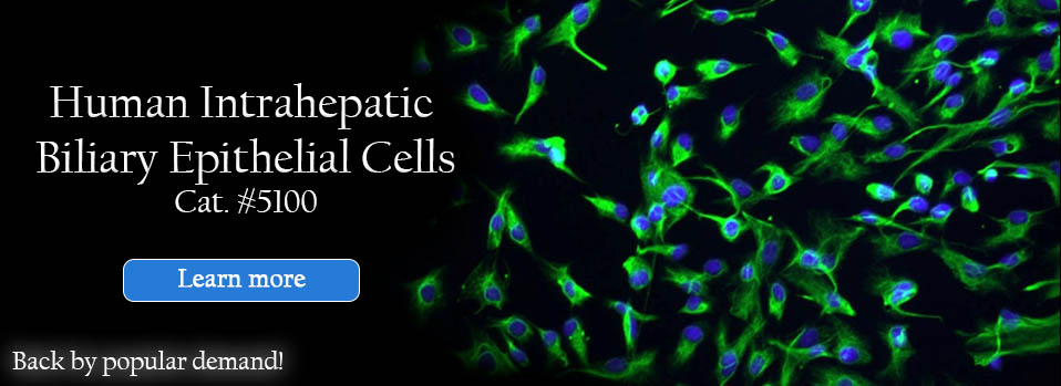 Human Intrahepatic Biliary Epithelial Cells