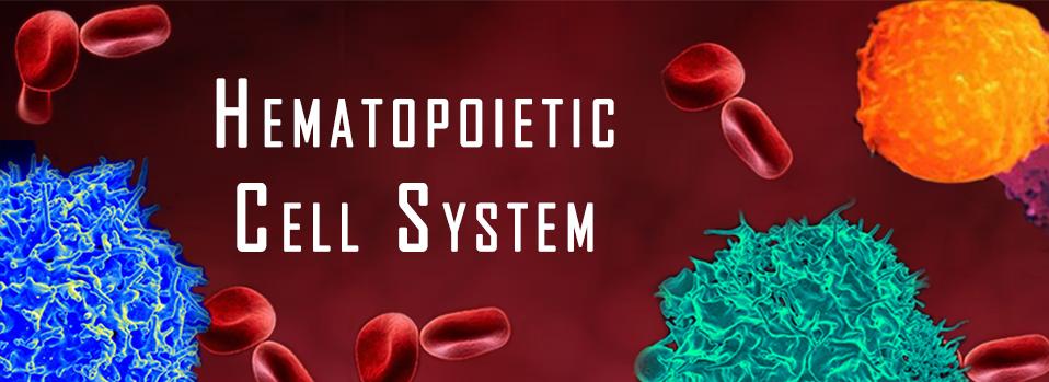 Hematopoietic Cell System