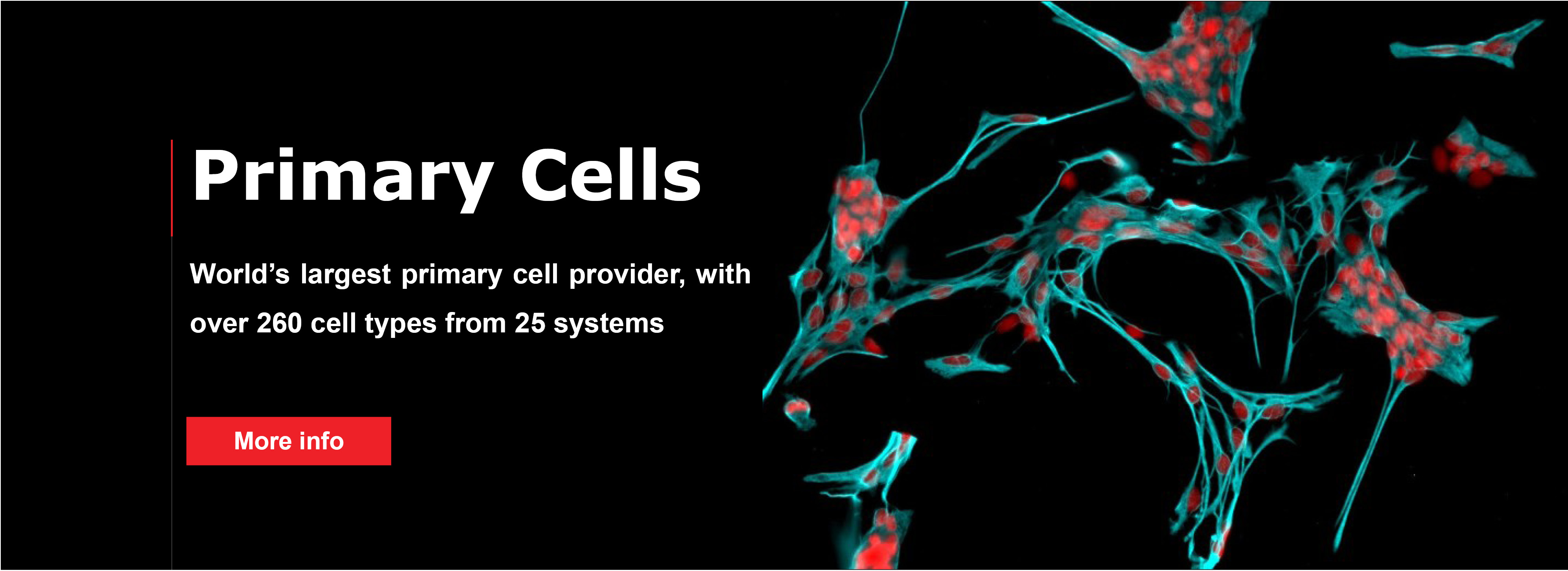 primary cells Primary cells differ from immortalized cell lines by limited population doubling without genetic and chemical modifications, primary cells retain many of the important physiological properties of their origin tissue systems and closely mimic the in vivo conditions.