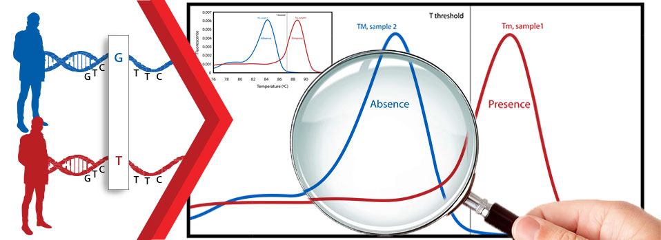 Genotyping by melt curve analysis