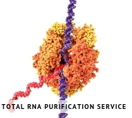 Total RNA Purification Service