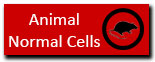 Animal normal cell